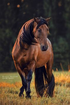 How Long Do Horses Live and Everything about Horse Age - Home Decor, Interior Design & Pets by Primcousa - - How Long Do Horses Live and Everything about Horse Age how long do horses live? beautiful pictures of horses Most Beautiful Horses, All The Pretty Horses, Animals Beautiful, Horse Photos, Horse Pictures, Horse Age, Bay Horse, Horse Horse, Horse Tips