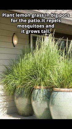 3 Creative and Modern Tips: Small Backyard Garden Families rustic backyard garden woods.Small Backyard Garden To Get backyard garden design water walls. Garden Yard Ideas, Backyard Garden Design, Backyard Patio, Lawn And Garden, Garden Projects, Rustic Backyard, Patio Ideas, Patio Decorating Ideas, Small Backyard Design