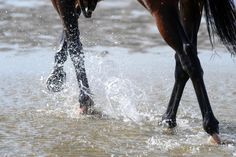 Laytown 9-12-75 #sea #sand #racing #Ireland The Scorpio Races, Wild Girl, Ireland, Horses, Sea, Dark, Animals, Animales, Animaux