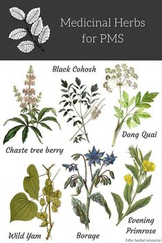 Medicinal herbs for PMS (Premenstrual Syndrome) essentially act as hormonal balancers. And in addition to using herbs, diet and nutrition can help ease the severity of PMS. Vitamin (Pyridoxine) and Vitamin E combined with a quality multi-vitamin that i Healing Herbs, Medicinal Plants, Natural Healing, Wound Healing, Natural Herbs, Natural Health Remedies, Herbal Remedies, Pms Remedies, Holistic Remedies