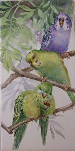 Joanna Burch - Parakeets     Just love her birds!  cw
