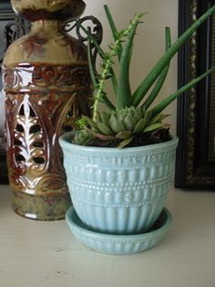 Hen and Chicks and succulents in vintage McCoy