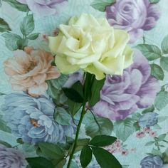 Rosa vera tra rose finte