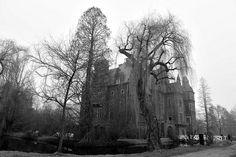 Schloss Krickenbeck (4)