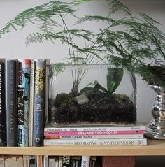 Vintage aquarium holds up my books and houses a Plumosa Fern...