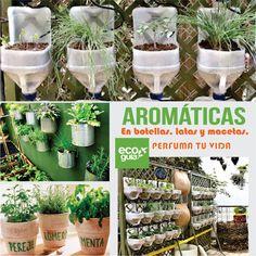REUTILIZA LATAS, GALONERAS, BOTELLAS Y MACETAS PARA SEMBRAR TUS PROPIAS HIERBAS AROMÁTICAS: oregano, menta, perejil, hierbabuena,cilantro,romero,manzanilla,hierbaluisa, etc. PARA TUS INFUSIONES Y ENSALADAS. Patio, Backyard, Aromatic Herbs, Self Watering, Plantar, Green Garden, Water Garden, Exterior, Healthy