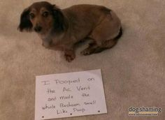 So funny!  Dogs that did something their owners didn't want them to do with captioned pics!  Can't stop laughing ;-)