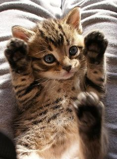 はい、手も足も上げました(^o^)