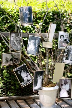 Family tree of wedding pictures