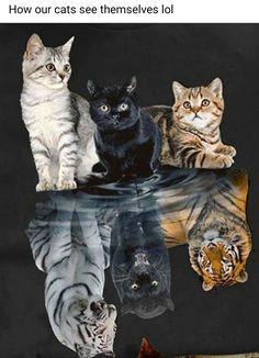 Cute Little Animals, Cute Funny Animals, Cute Dogs, Cute Cat Wallpaper, Animal Wallpaper, Cute Animal Drawings, Cute Animal Pictures, Cute Cats And Kittens, Kittens Cutest