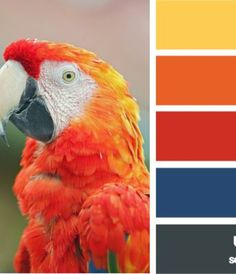 macaw spectrum for family pictures
