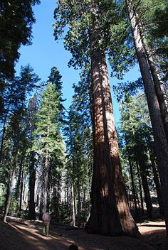 Sequoia National Park...so humbling, I can't wait to go back.