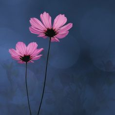 Color Inspiration: Autumn Cosmos Flowers