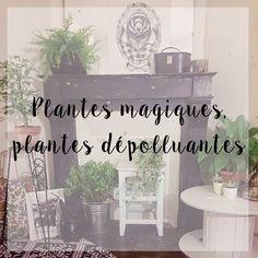 Plantes magiques, plantes dépolluantes. zéro déchet. zero waste.