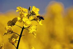 Mysterious Bee Deaths Lead France to Ban Syngenta Pesticide