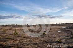 Photo about Marsh landscape on stenfjellet hedmarksvidda Hedmark county Norway. Beautiful evening sky and Spruce trees. Image of trees, county, beautiful - 148820240 Spruce Tree, Evening Sky, Photo Tree, Free Stock Photos, Norway, Trees, Landscape, Illustration, Outdoor