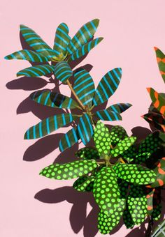 """Berlin-based artist Sarah Illenberger's series """"Wonderplants"""" was created during a six-week stay in Portugal using nothing more than plants, and stickers and tape from local DIY stores. More images below. Sarah Illenberger's Website … Continue reading → Sarah Illenberger, Pop Art, Motif Floral, Floral Flowers, Art And Illustration, Cartoon Illustrations, Art Design, Art Direction, Art Projects"""