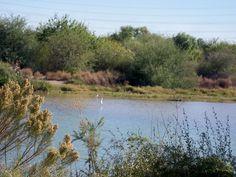 Lake at Riparian Preserve - Gilbert, Az