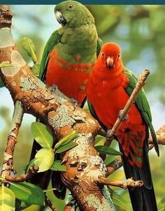 Beautiful Multi Color Parrots Picture