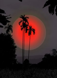 Silhouette of Palm trees & Red moon art Beautiful Moon, Beautiful World, Beautiful Places, Simply Beautiful, Amazing Places, Stars Night, Cool Pictures, Beautiful Pictures, Shoot The Moon