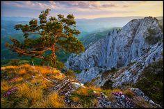 tree by Zsolt Andras Szabo