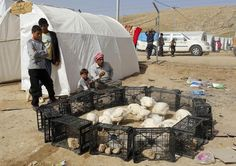 Yazidi refugees sell chickens at a refugee camp on the outskirts of Duhok, Iraq February 28, 2015. REUTERS/Asmaa Waguih