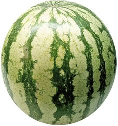 When to harvest an icebox watermelon: --mature in about 75 days --slightly smaller than a volleyball --sweet spot goes from white/green to yellow/cream --rest of the rind is a dull green --squiggly is dried up and brown Sugar Baby Watermelon, Watermelon Plant, How To Grow Watermelon, Watermelon Patch, Natural Health Remedies, Home Remedies, Watermelon Varieties, Poison Ivy Remedies, Nutrition Herbalife
