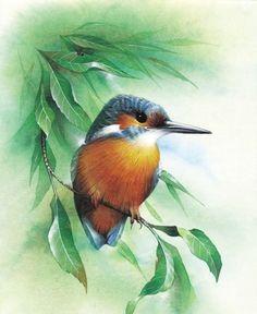 David A Finney — Kingfisher Watercolor Bird, Watercolor Animals, Bird Illustration, Illustrator, China Painting, Bird Drawings, Bird Pictures, Kingfisher, Wildlife Art