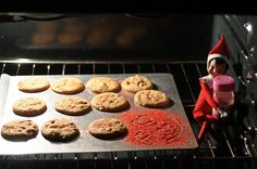 Elf on the Shelf 2010 (Fizzy): 12.08: Fizzy baked cookies last night. White chocolate macadamia with red sprinkles. Yum!