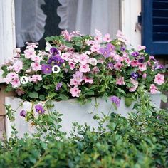 Impatiens sind lange blühende Pflanzen , sie haben mehrfarbige  Vielfalt  und das Laub bleibt ein sattes Grün. A. Impatiens 'Dazzler Pink' – 3 B. Viola 'Sorbet Blau Babyface' – 3
