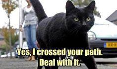 black cat crossing - Cats Fan Art (34482178) - Fanpop