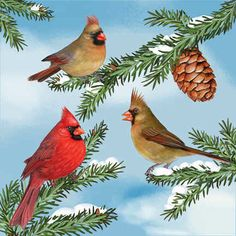 images of cardinals in winter | in spring cardinals in summer cardinals in autumn cardinals through ...