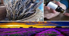 Lavender has been studied recently for several purposes, including treatment of mood and anxiety disorders (see, for example, the video I profiled in my last post, Lavender for Generalized Anxiety Disorder). Though it's better known for its analgesic (pain-killing) properties, there hasn't been a single documented clinical trial on lavender for the treatment of migraine …
