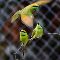 A beautiful bee eater group !