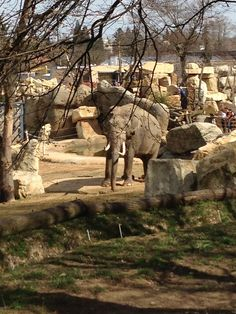 See 4021 photos and 353 tips from 22526 visitors to Zoo Praha. Prague Zoo, Museums, Camel, Elephant, Animals, Beautiful, Prague, Animales, Animaux