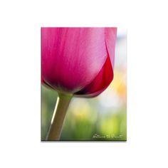 Blumenbild auf Leinwand, als Kunstdruck oder Fototapete  Tulpenbild Pink Sensation