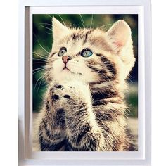 DIY 5D Naughty Kitten Cat Stitch Kit Crystal Diamond Embroidery Painting Cross Stitch Home Decor Craft