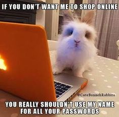 -Are you looking for rabbit care tricks and advice to learn new ideas about your bunny? Funny Animal Jokes, Cute Funny Animals, Animal Memes, Funny Cute, Hilarious, Rabbit Jokes, Funny Rabbit, Pet Bunny Rabbits, Pet Rabbit