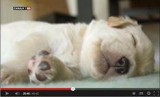 La Vida Secreta De Los #Perros