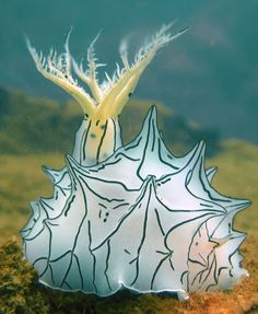 Nudibranch aka Sea Slug More Underwater Creatures, Underwater Life, Ocean Creatures, Beautiful Sea Creatures, Animals Beautiful, Poisson Mandarin, Fauna Marina, Water Animals, Tier Fotos