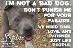 #adopt #shawpbr