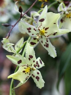Orchids by donsutherland1, via Flickr