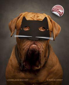 """TOM"" Dogue De Bordeaux Print by Ron Schmidt. Cat mask, Halloween, Trick or Treat, Photography, Dog Art"