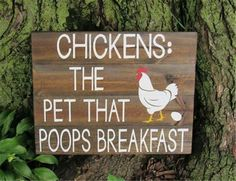 Chickens: The pet that poops breakfast.