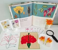 Parts of the flower provocation #science #STEAM