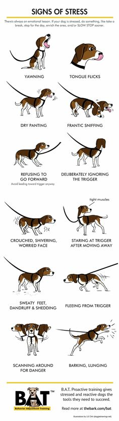 ♥ Dog Care Tips ♥ It's important to recognize the signs of stress to give your dog a break and B. proactive training gives reactive dogs the tools they need to succeed Puppy Care, Pet Care, Reactive Dog, Signs Of Stress, Dog Facts, Dog Care Tips, Pet Tips, Dog Training Tips, Potty Training