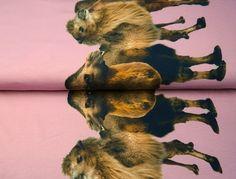 Stenzo Jersey Stoff bedruckt  Stenzo Stoffe bei den Stoffjunkies – Qualität mit Öko Tex zertifizierung!  Hier könnt ihr den für seine Qualität geliebten Jerseystoff von Stenzo kaufen.  #kaidsoonlinekurse #stoffjunkie #stoffjunkies #jersey #stoffe #kleid #nähen #nähenisttoll #nähenistwiezaubernkönnen #sewingblogger #nähblogger #instasew #shirtKleid Stoff Design, Pink, Animals, Camel, Sew Dress, Sewing Patterns, Cotton, Animales, Animaux