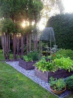 Small and simple backyard garden with individual beds, pots, and small garden trees. Good idea for back yard rather than one long garden bed? Landscaping Around Trees, Garden Landscaping, Landscaping Ideas, Backyard Ideas, The Secret Garden, Garden Cottage, Veg Garden, Garden Planters, Side Garden