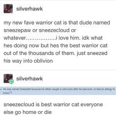 Warrior Cats Funny, Warrior Cats Comics, Warrior Cat Memes, Warrior Cats Series, Warrior Cats Books, Warrior Cats Fan Art, Cat Comics, Big Cats, Book Series