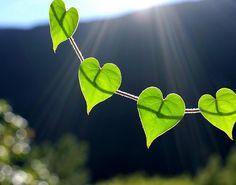 ❥ heart leaves